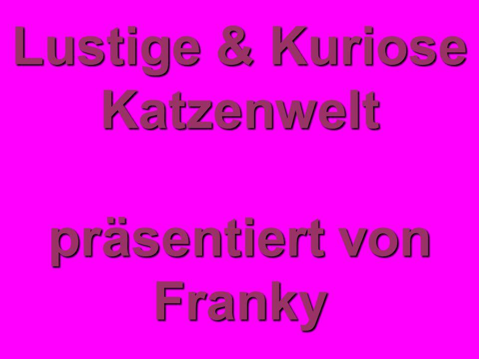 Lustige & Kuriose Katzenwelt präsentiert von Franky
