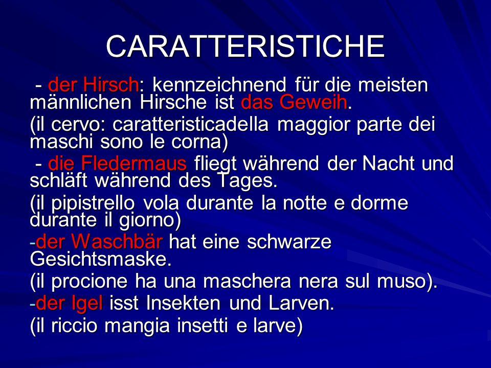 CARATTERISTICHE - der Hirsch: kennzeichnend für die meisten männlichen Hirsche ist das Geweih.