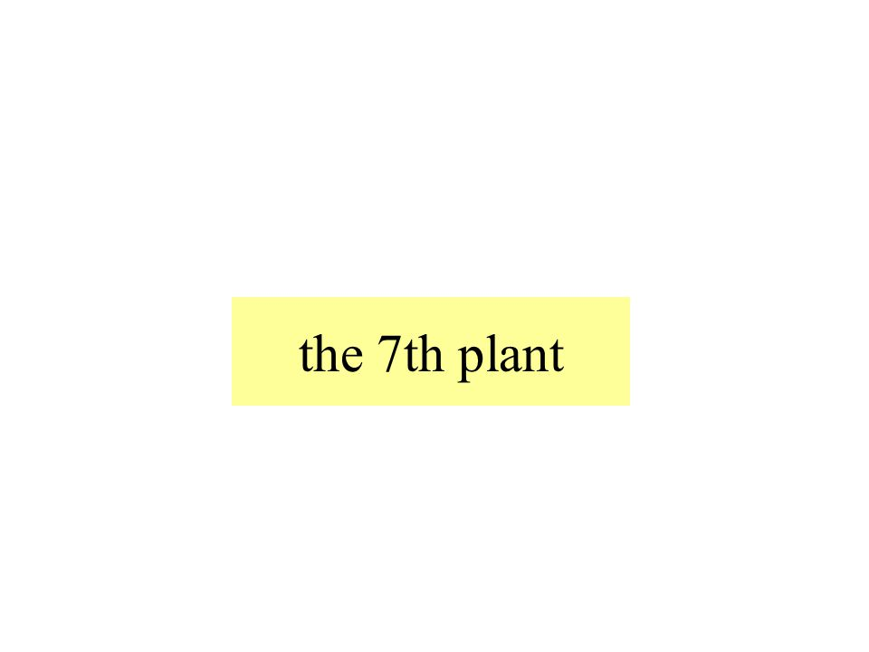 the 7th plant