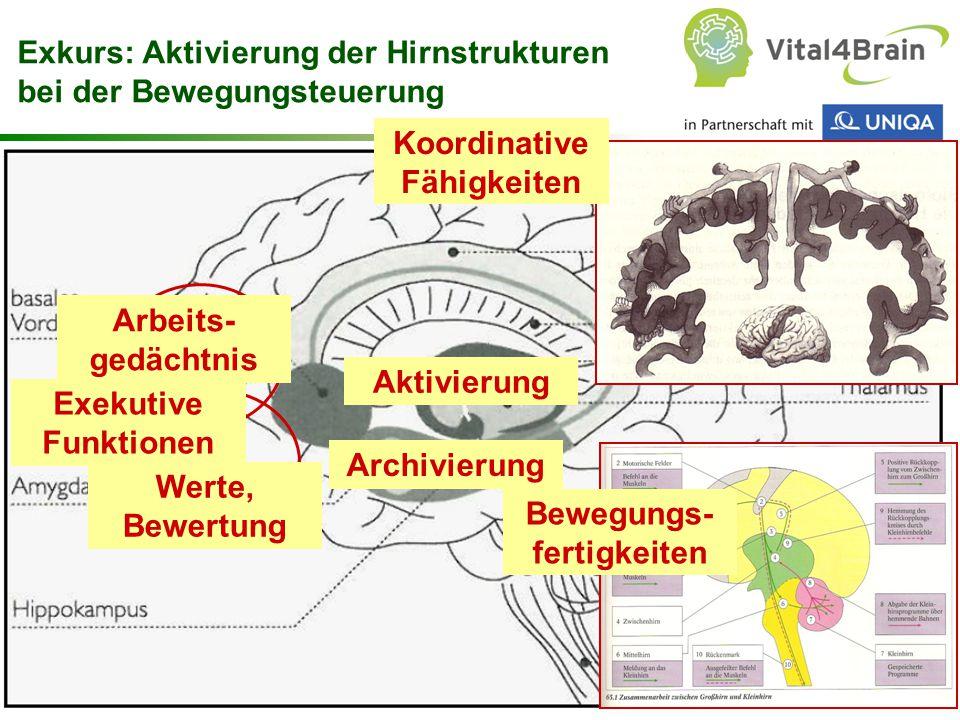 Chart 22 Koordinative Fähigkeiten Bewegungs- fertigkeiten Exkurs: Aktivierung der Hirnstrukturen bei der Bewegungsteuerung Arbeits- gedächtnis Aktivierung Exekutive Funktionen Werte, Bewertung Archivierung
