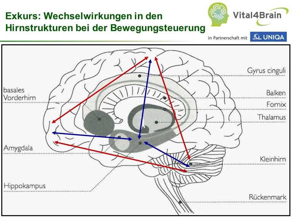 Chart 23 Exkurs: Wechselwirkungen in den Hirnstrukturen bei der Bewegungsteuerung