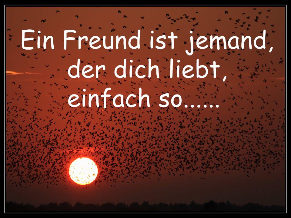 Ein Freund ist jemand, der zu dir kommt, einfach so, weil er spürt, dass du einsam bist!