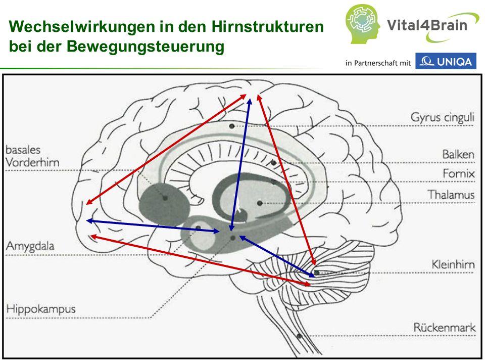 Chart 57 Wechselwirkungen in den Hirnstrukturen bei der Bewegungsteuerung