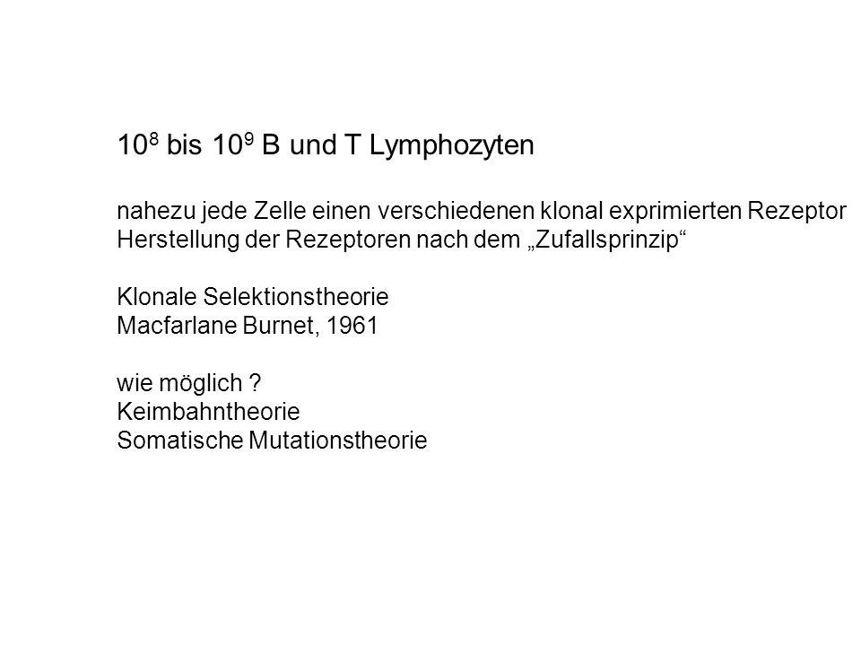 """10 8 bis 10 9 B und T Lymphozyten nahezu jede Zelle einen verschiedenen klonal exprimierten Rezeptor Herstellung der Rezeptoren nach dem """"Zufallsprinz"""