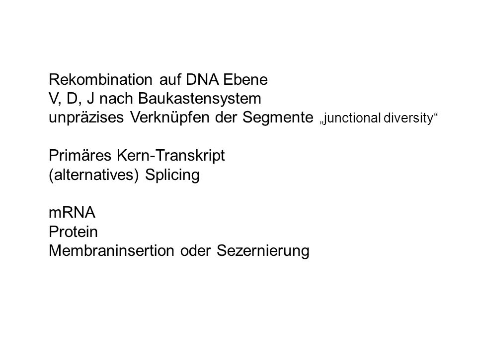 "Rekombination auf DNA Ebene V, D, J nach Baukastensystem unpräzises Verknüpfen der Segmente ""junctional diversity"" Primäres Kern-Transkript (alternati"