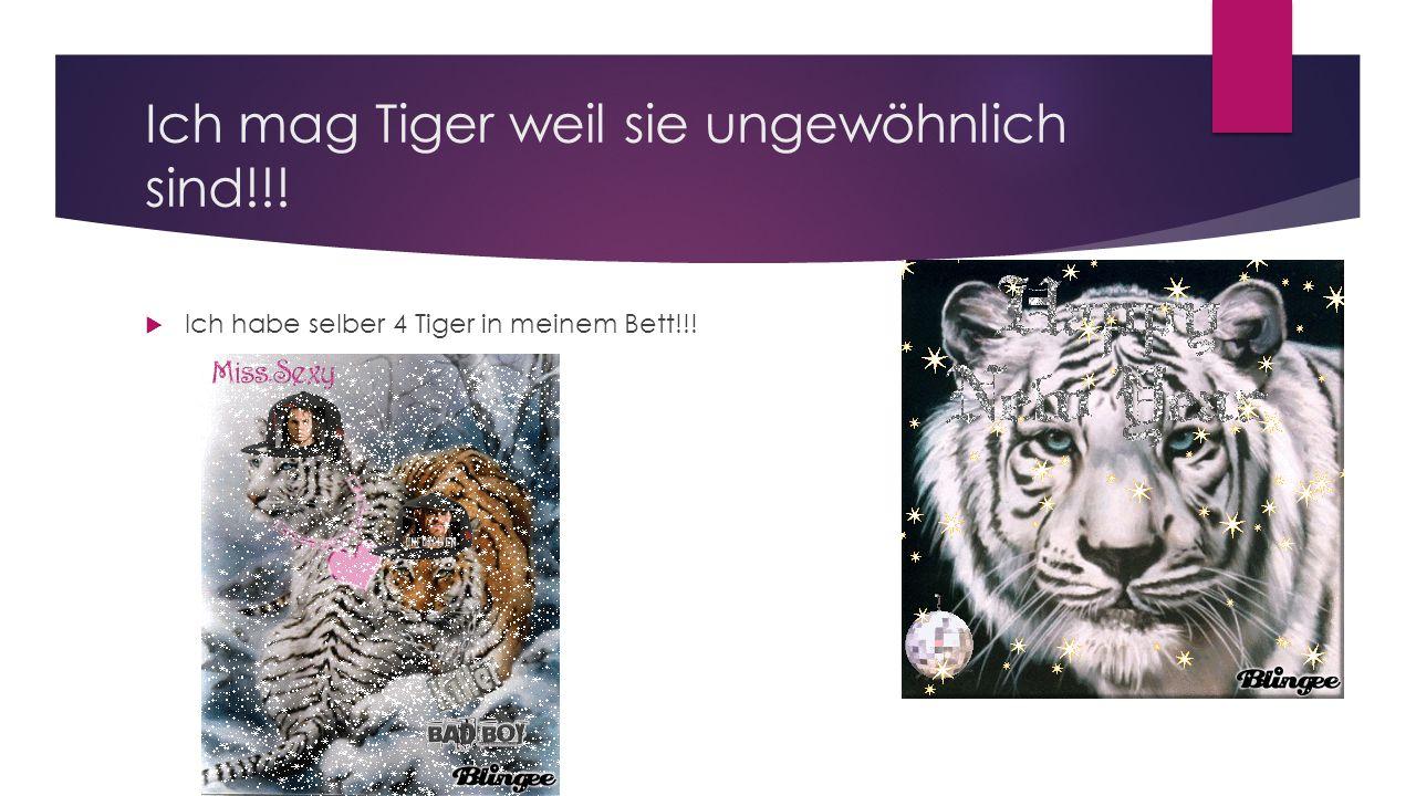 Ich mag Tiger weil sie ungewöhnlich sind!!!  Ich habe selber 4 Tiger in meinem Bett!!!