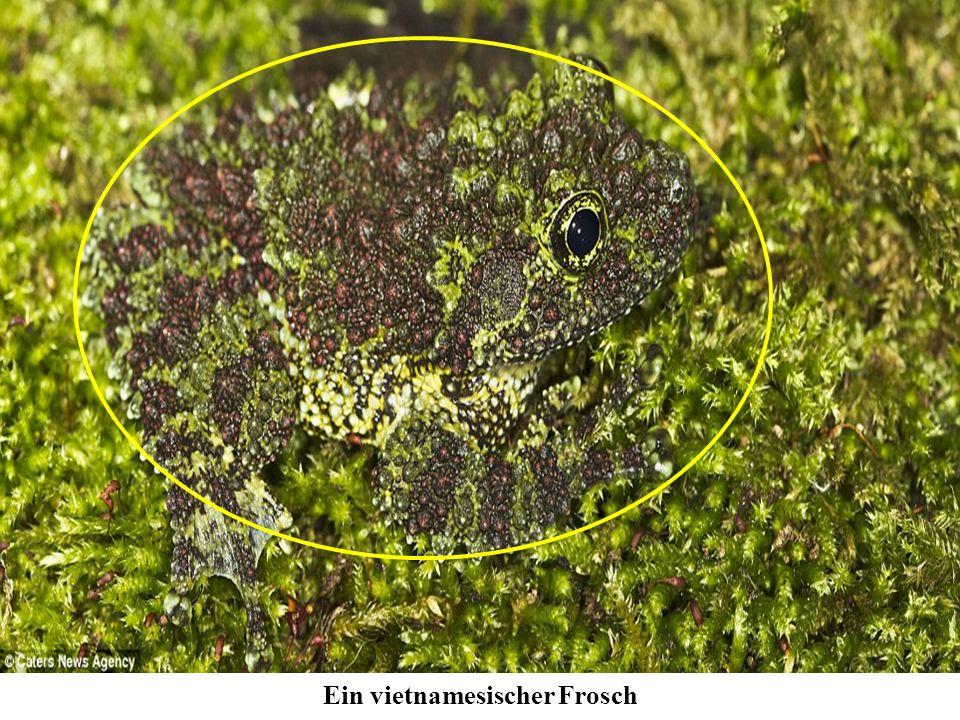 Frosch, bei uns in der Schweiz?