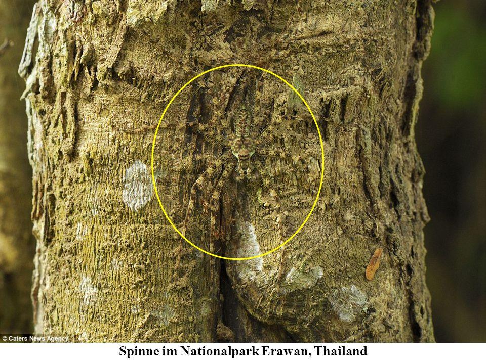 Spinne im Nationalpark Erawan, Thailand