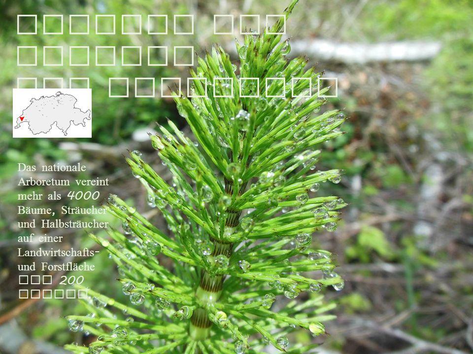 Entlang der Aubonne zum Arboretum 16.5.2015 Das nationale Arboretum vereint mehr als 4000 Bäume, Sträucher und Halbsträucher auf einer Landwirtschafts