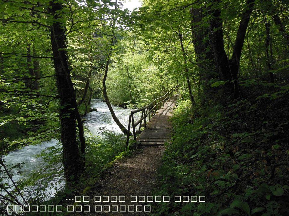 ... in eine wilde Welt entlang der Aubonne