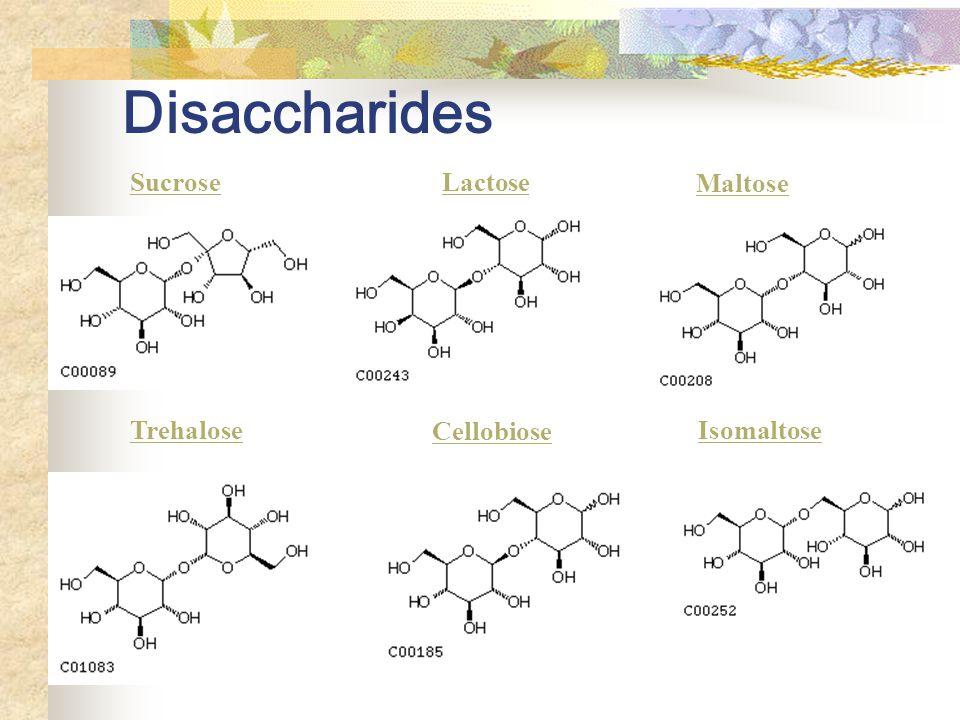 Disaccharides SucroseLactose Maltose IsomaltoseTrehalose Cellobiose