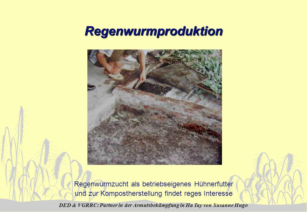 DED & VGRRC: Partner in der Armutsbekämpfung in Ha Tay von Susanne Hugo Regenwurmproduktion Regenwurmzucht als betriebseigenes Hühnerfutter und zur Kompostherstellung findet reges Interesse