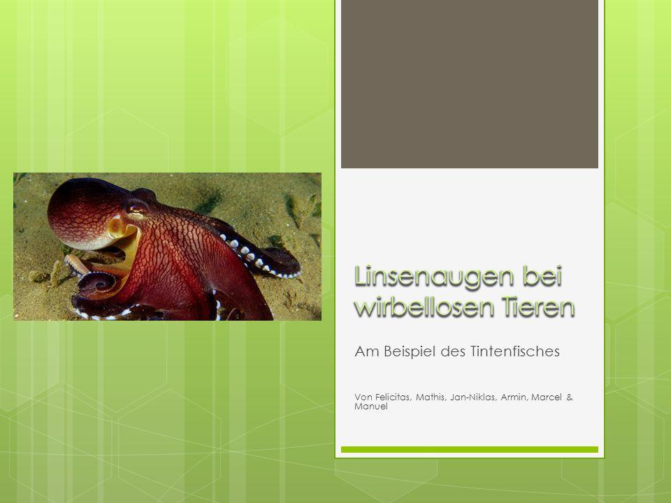Am Beispiel des Tintenfisches Von Felicitas, Mathis, Jan-Niklas, Armin, Marcel & Manuel