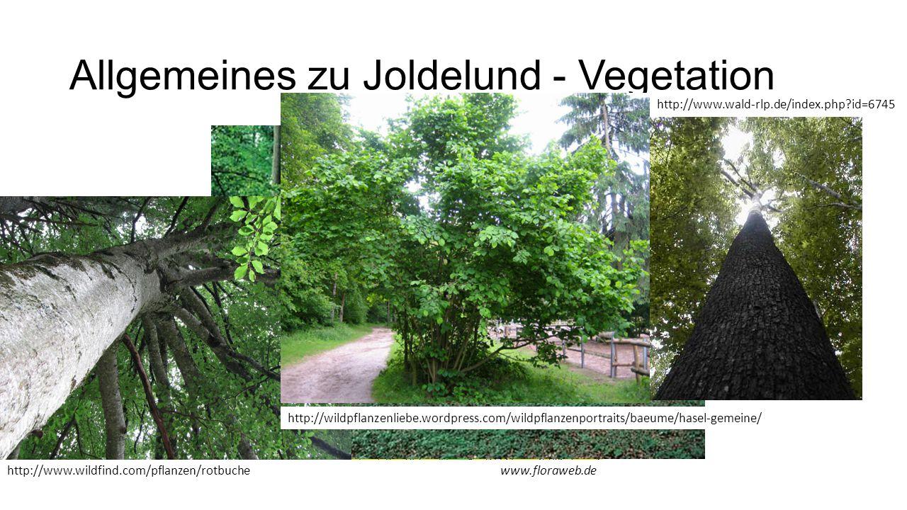Allgemeines zu Joldelund - Vegetation www.floraweb.dehttp://www.wildfind.com/pflanzen/rotbuche http://www.wald-rlp.de/index.php?id=6745 http://wildpfl