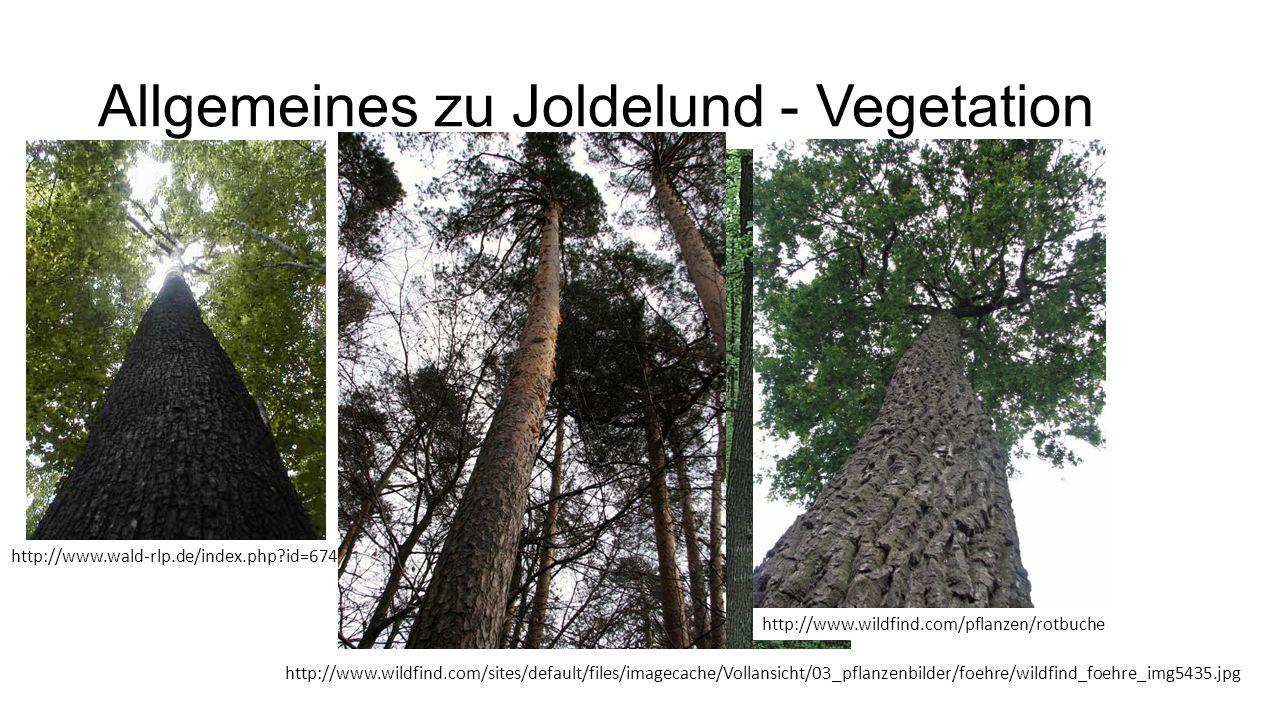 Allgemeines zu Joldelund - Vegetation www.floraweb.de http://www.wald-rlp.de/index.php?id=6745 http://www.wildfind.com/pflanzen/rotbuche http://www.wi