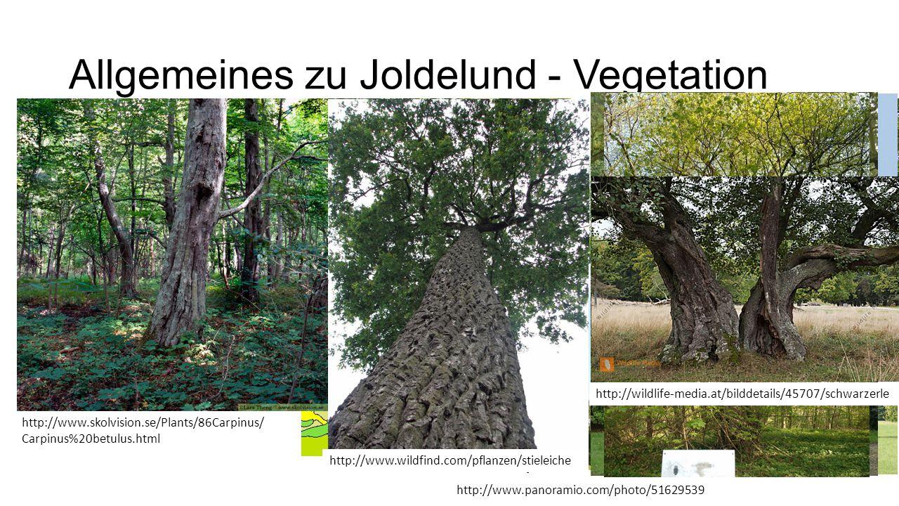 Allgemeines zu Joldelund - Vegetation www.floraweb.de http://www.skolvision.se/Plants/86Carpinus/ Carpinus%20betulus.html http://www.wildfind.com/pfla