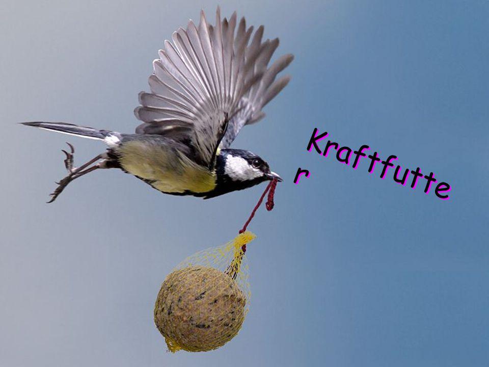 Kraftfutte r