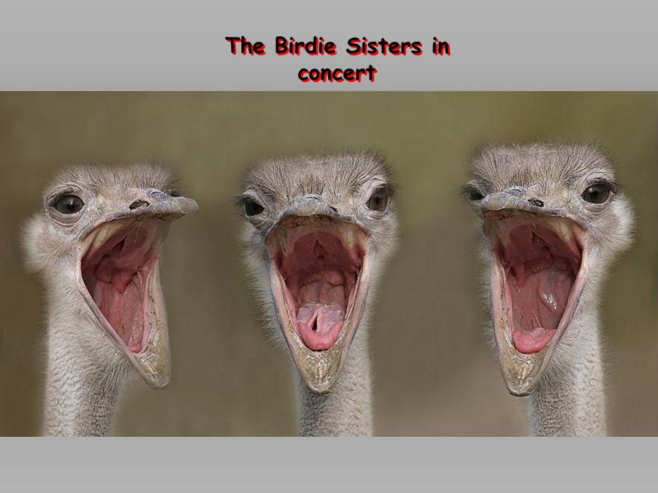 The Birdie Sisters in concert