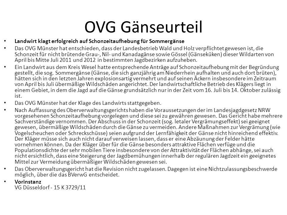 OVG Gänseurteil Landwirt klagt erfolgreich auf Schonzeitaufhebung für Sommergänse Das OVG Münster hat entschieden, dass der Landesbetrieb Wald und Hol
