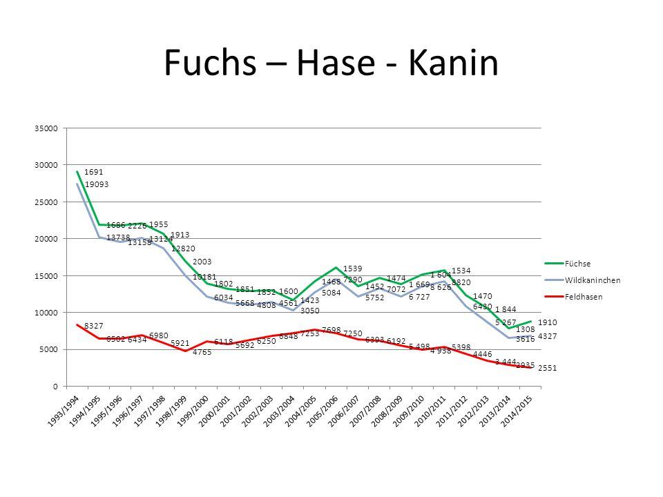 Fuchs – Hase - Kanin