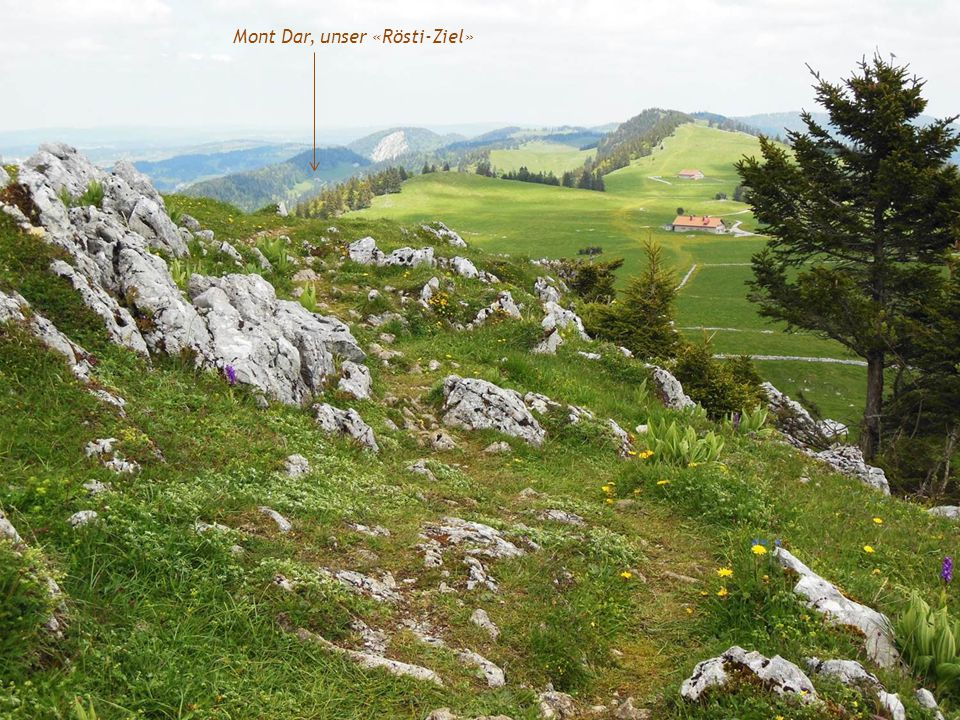 Mont Dar, unser «Rösti-Ziel»