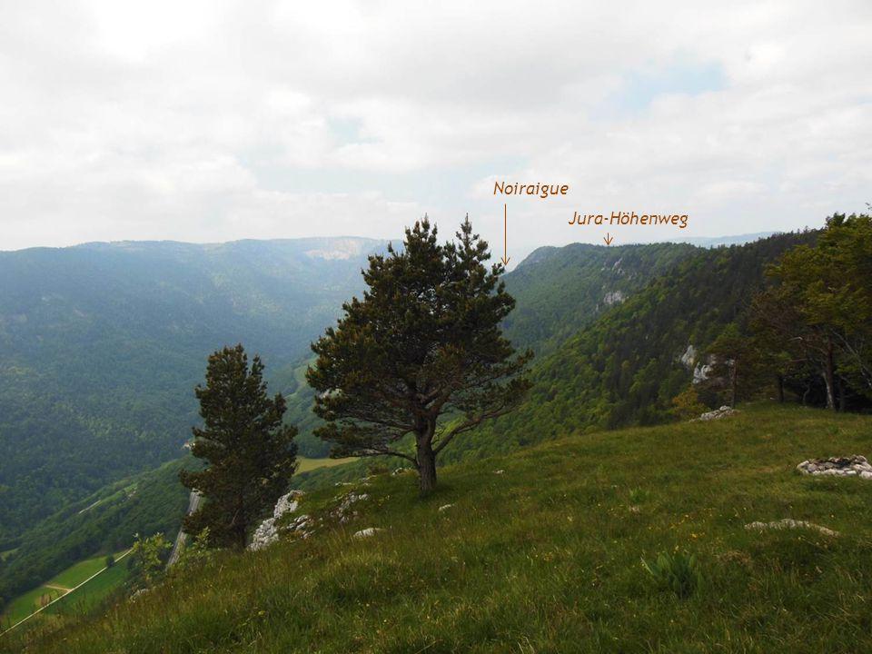 Alp Les Neigeux Im Hintergrund La Chaux-de-Fonds