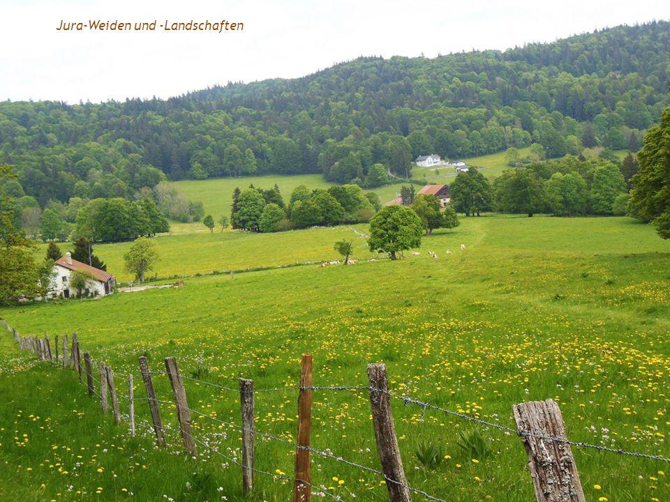 Jura-Weiden und -Landschaften