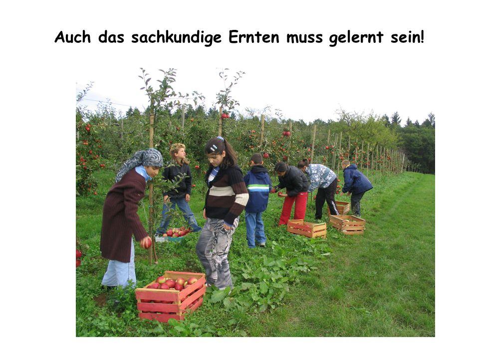 Auch das sachkundige Ernten muss gelernt sein!