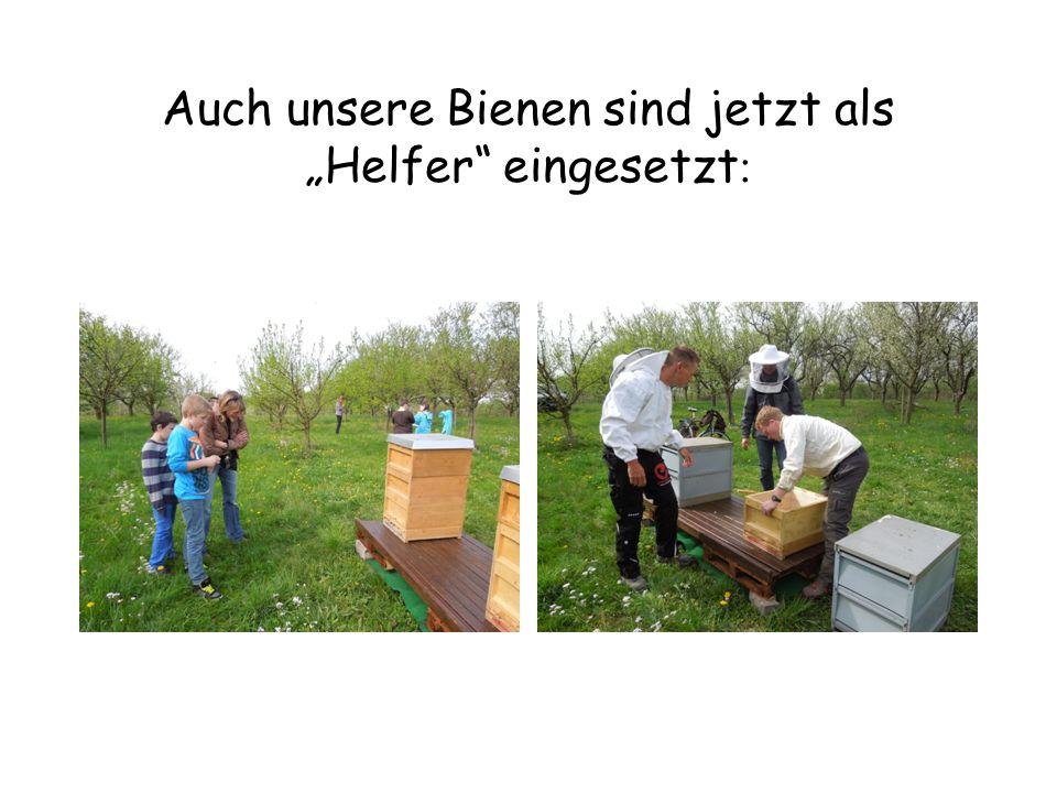 """Auch unsere Bienen sind jetzt als """"Helfer"""" eingesetzt :"""