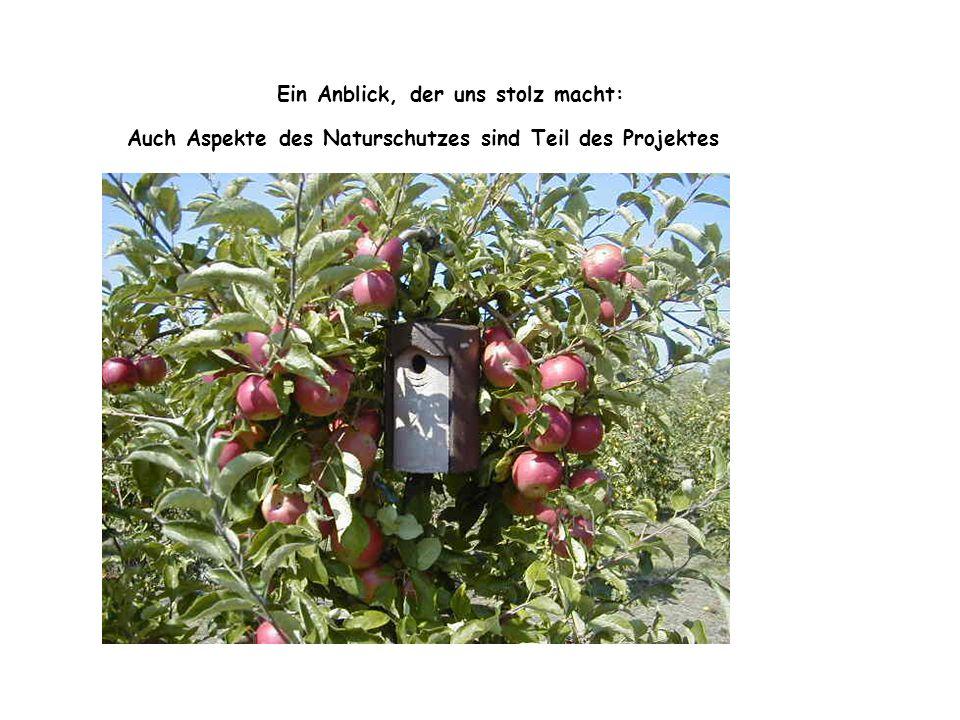 """Arbeiten auf """"unserer Apfelreihe ist auch immer ein bißchen Abenteuer"""