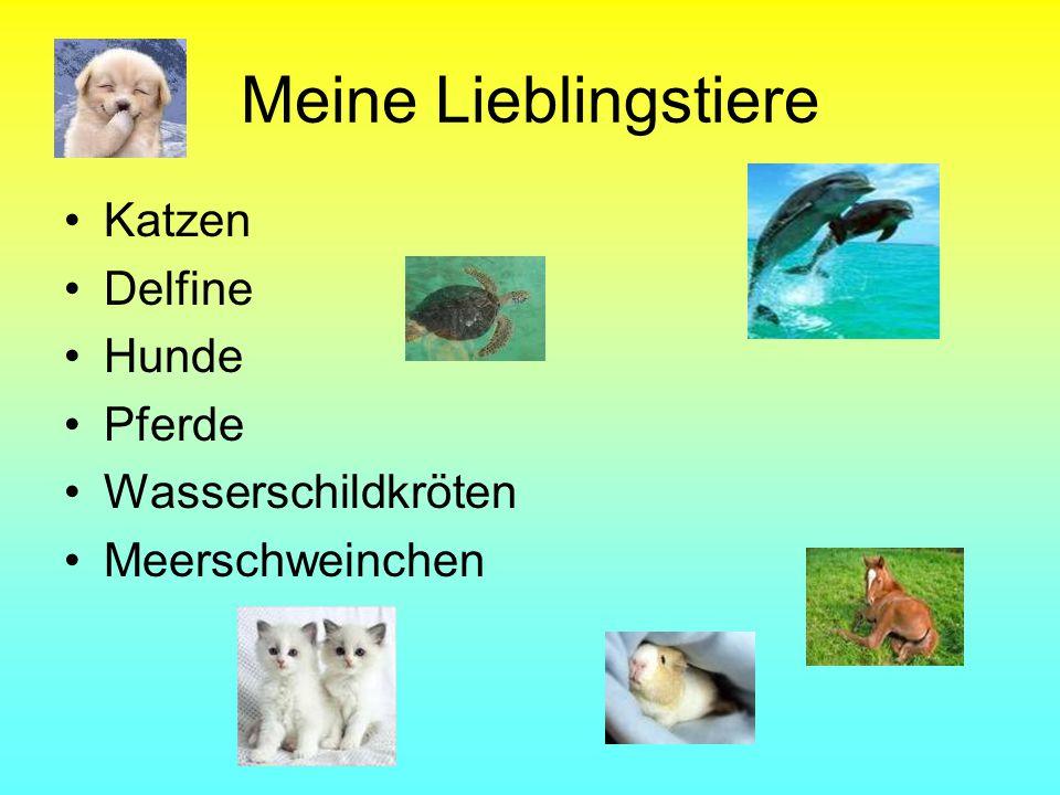 Meine Lieblingstiere Katzen Delfine Hunde Pferde Wasserschildkröten Meerschweinchen