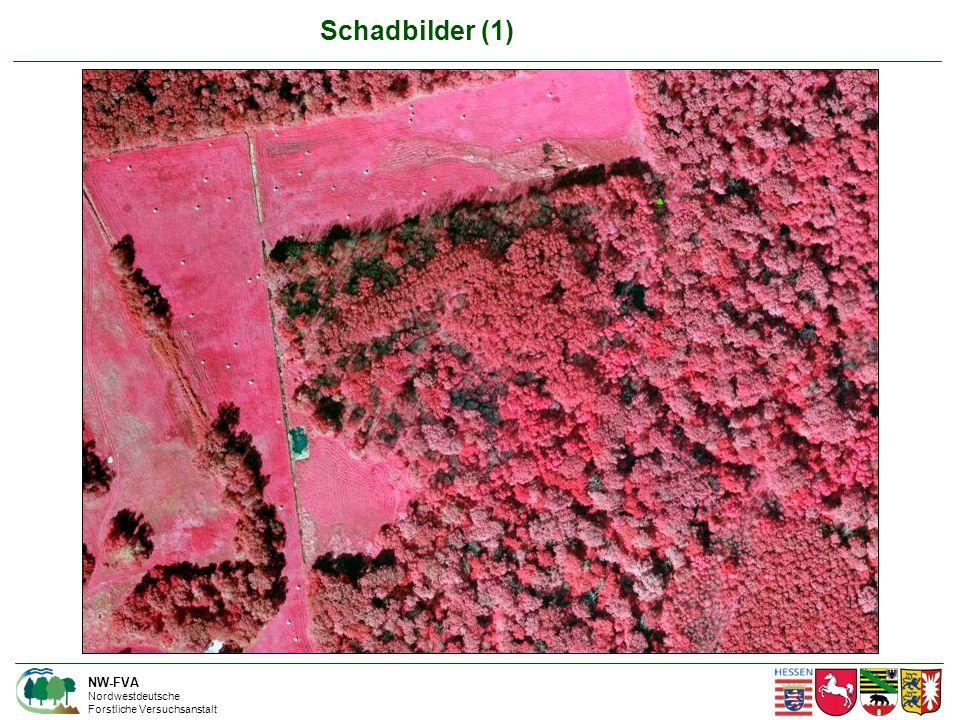 Schadbilder (1) NW-FVA Nordwestdeutsche Forstliche Versuchsanstalt