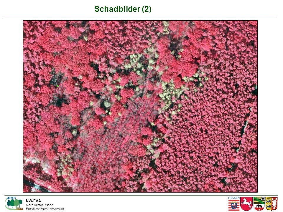 NW-FVA Nordwestdeutsche Forstliche Versuchsanstalt Schadbilder (2)