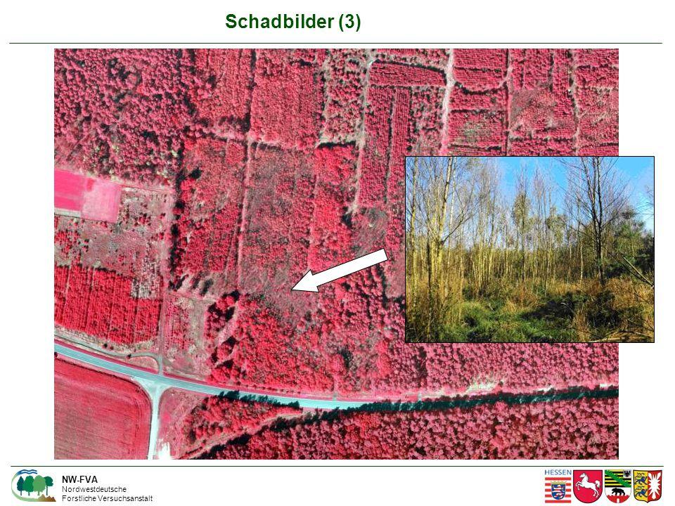 NW-FVA Nordwestdeutsche Forstliche Versuchsanstalt Schadbilder (3)