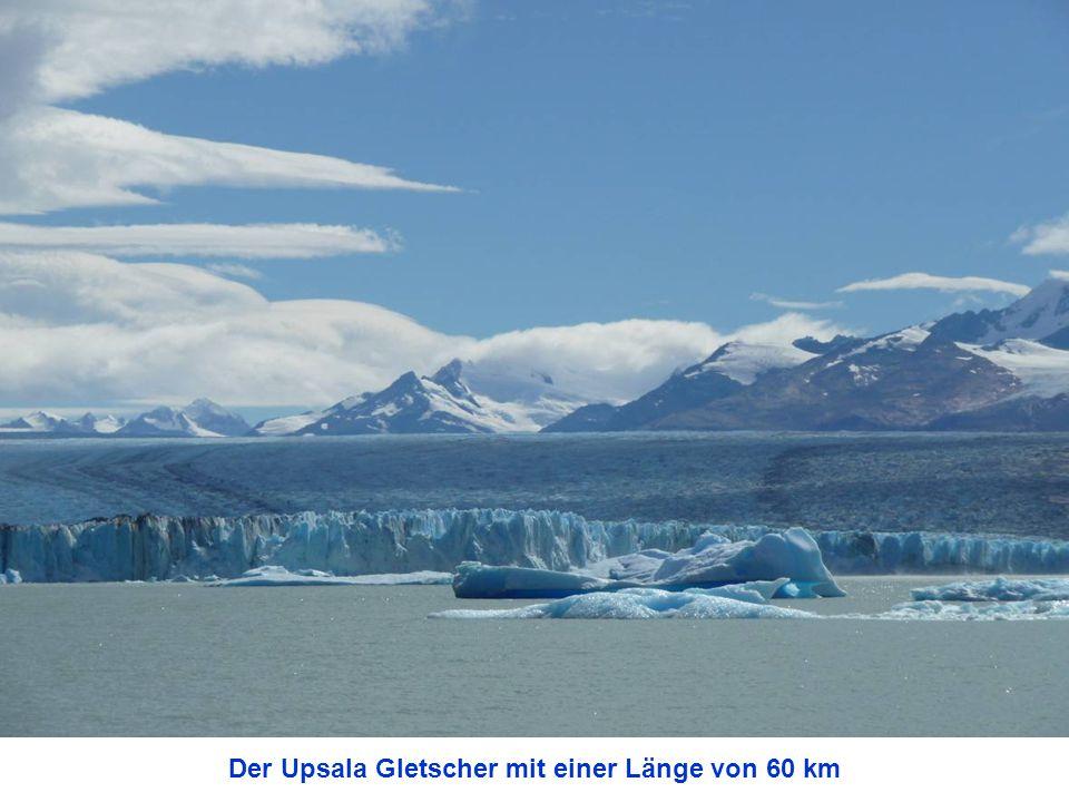 Der Upsala Gletscher mit einer Länge von 60 km