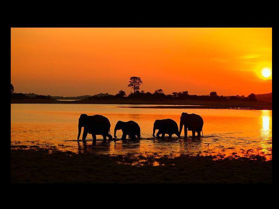 Andy Rouse ist ein Naturfotograf, der auf der ganzen Welt bekannt ist.