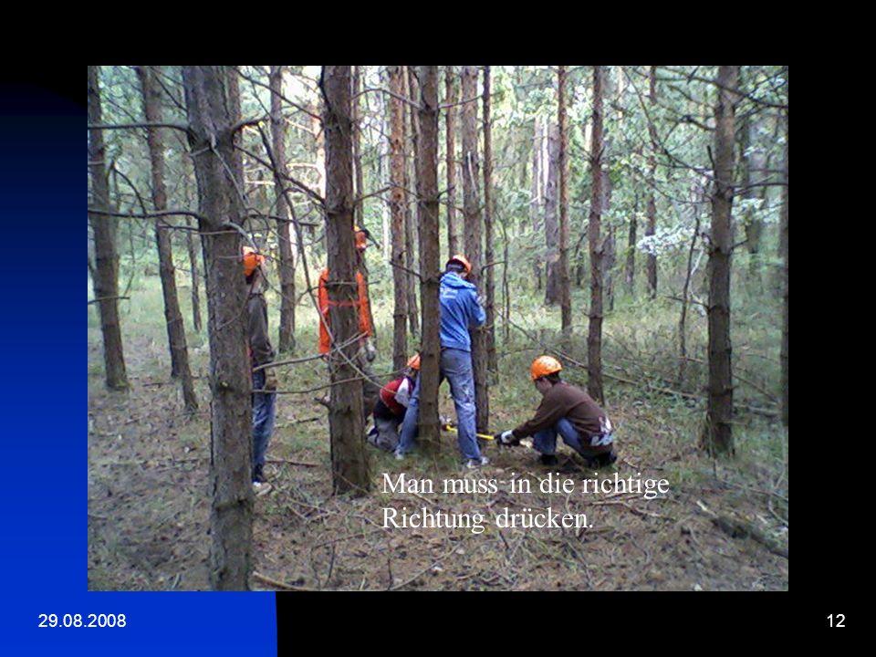 29.08.200811 Ein Baum wird gefällt.