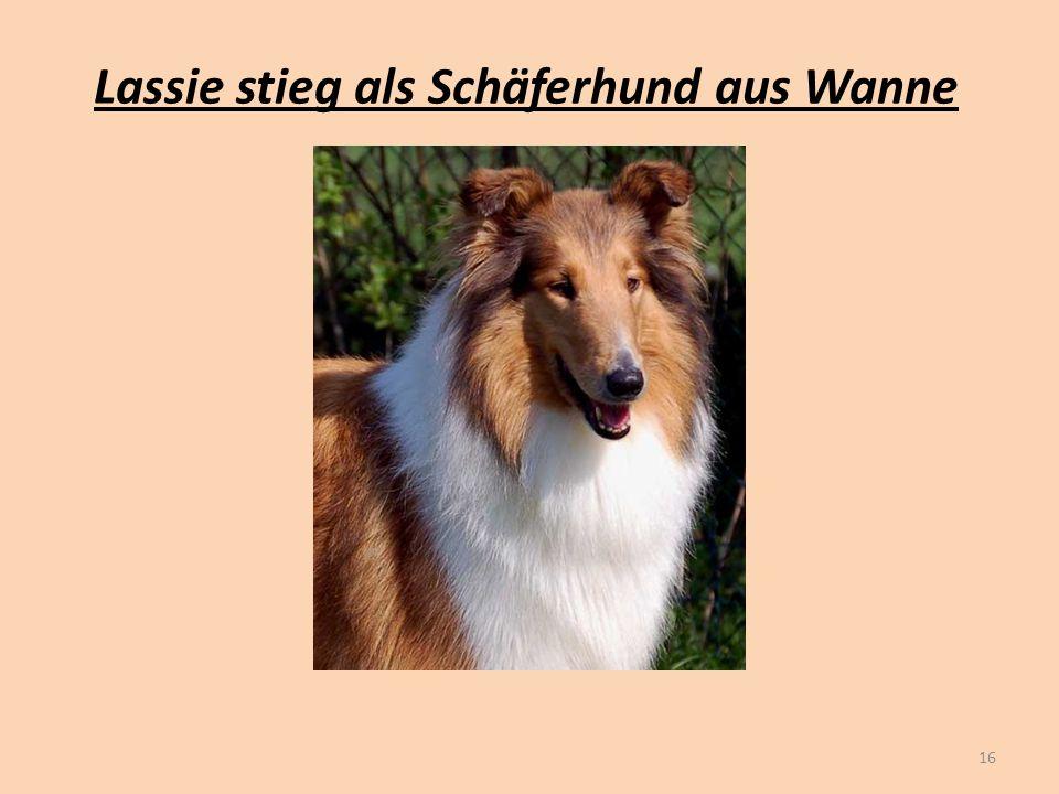 Lassie stieg als Schäferhund aus Wanne 16