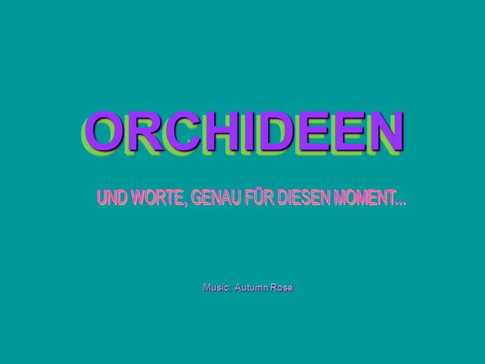 ORCHIDEEN ORCHIDEEN Music: Autumn Rose