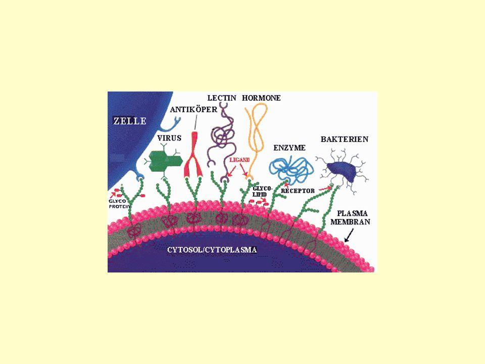 diverse Rezeptoren