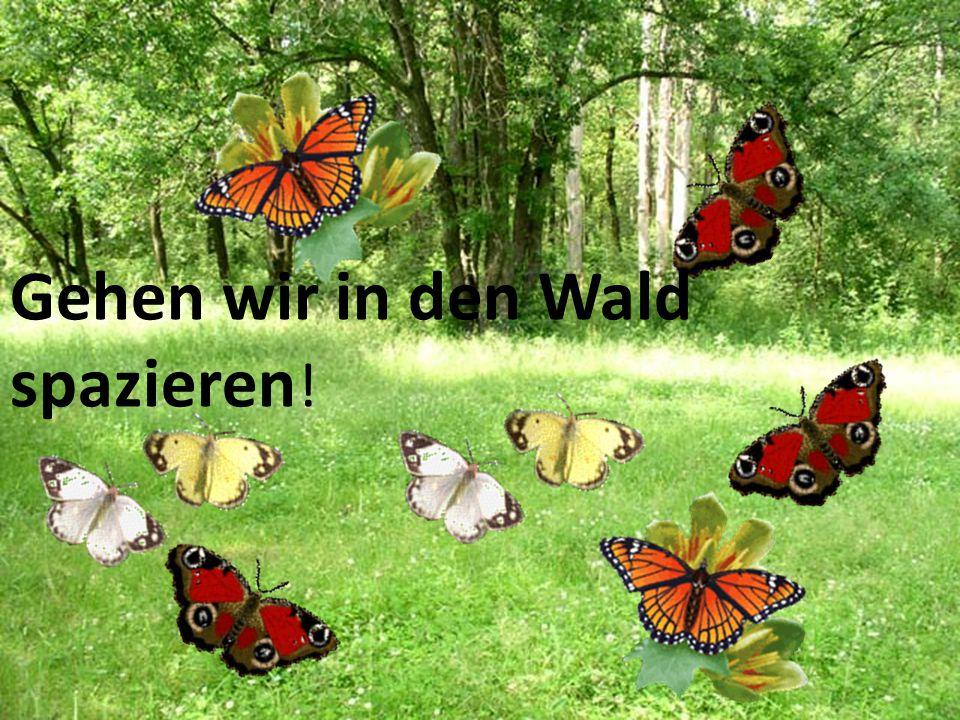 Gehen wir in den Wald spazieren !