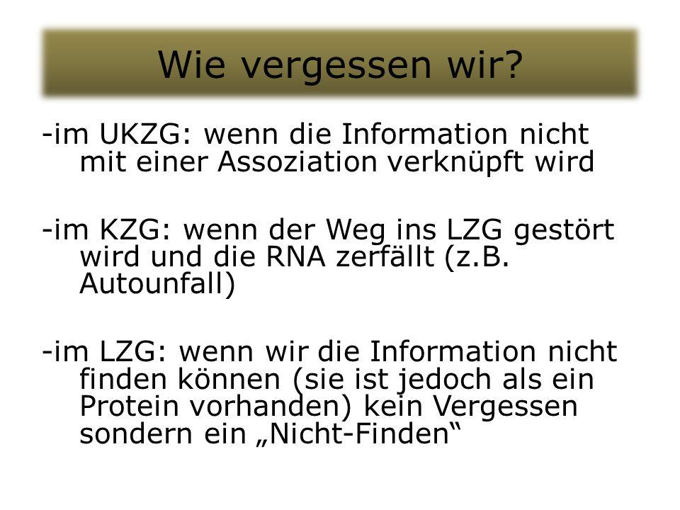 Wie vergessen wir? -im UKZG: wenn die Information nicht mit einer Assoziation verknüpft wird -im KZG: wenn der Weg ins LZG gestört wird und die RNA ze