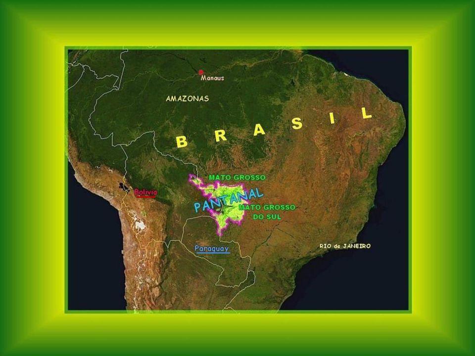 DAS PANTANAL Ist ein einzigartiges Ökosystem, das eine Oberfläche halb so groß wie Frankreich bedeckt. Das Wort Pantanal kann man mit Feuchtgebiet übe