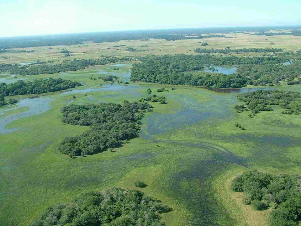 Aus dem Hochland kommend, fließen die Flüsse in das PANTANAL zum Rio Paraguay, der nach Süden strömt. Die Überschwemmungen treten nicht plötzlich auf,