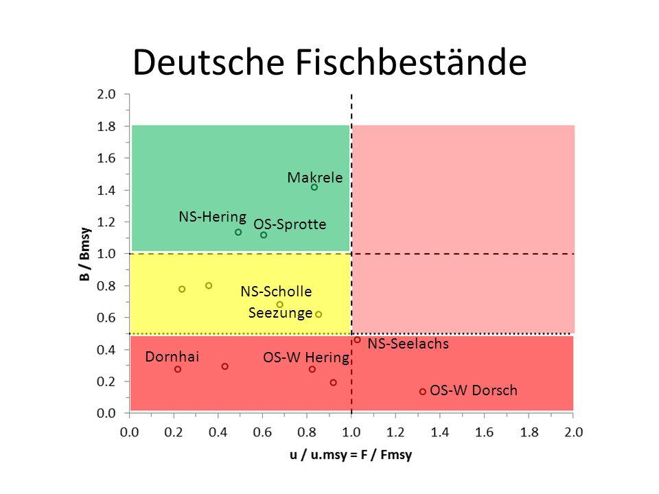 Makrele NS-Hering OS-Sprotte NS-Scholle NS-Seelachs OS-W Dorsch OS-W Hering Dornhai Seezunge