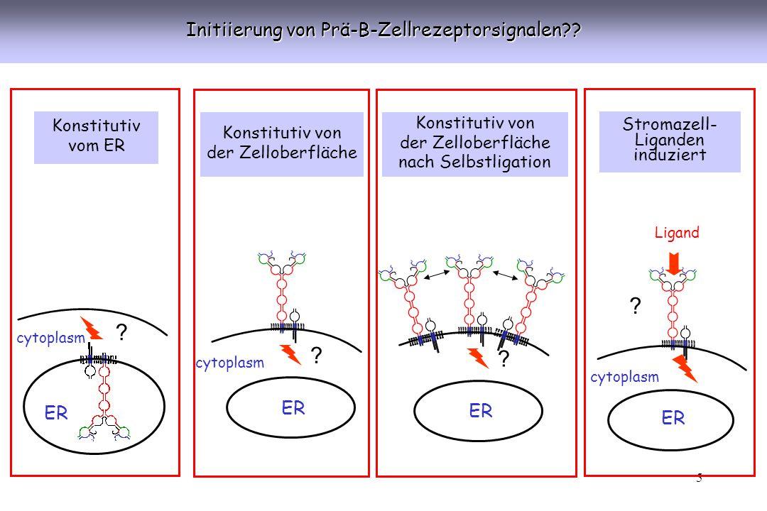 16 Proliferative Signale während der Entwicklung früher B-lymphoider Zellen Pro KM-Stromazelle Pro Prä SCF c-kit IL7 Prä-BZR IL7-R VCAM-1 VLA-4 Prä-BZR- Ligand??.