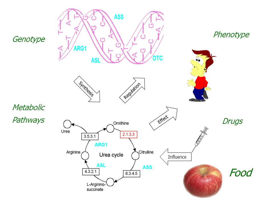 Genotype Metabolic Pathways Phenotype Drugs Synthesis Regulation Influence Effect Food
