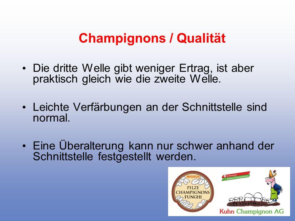 Champignons / Qualität Der Hut beginnt sich im Reifestadium zu öffnen.