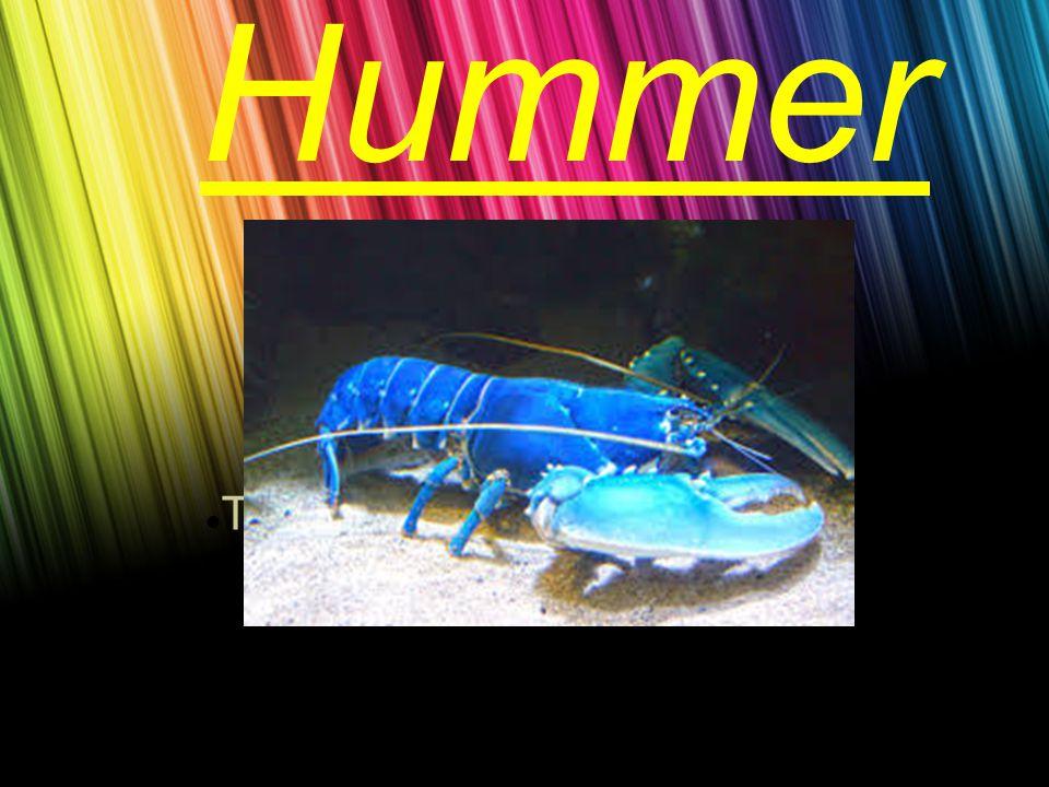 Text durch Klicken hinzufügen Hummer