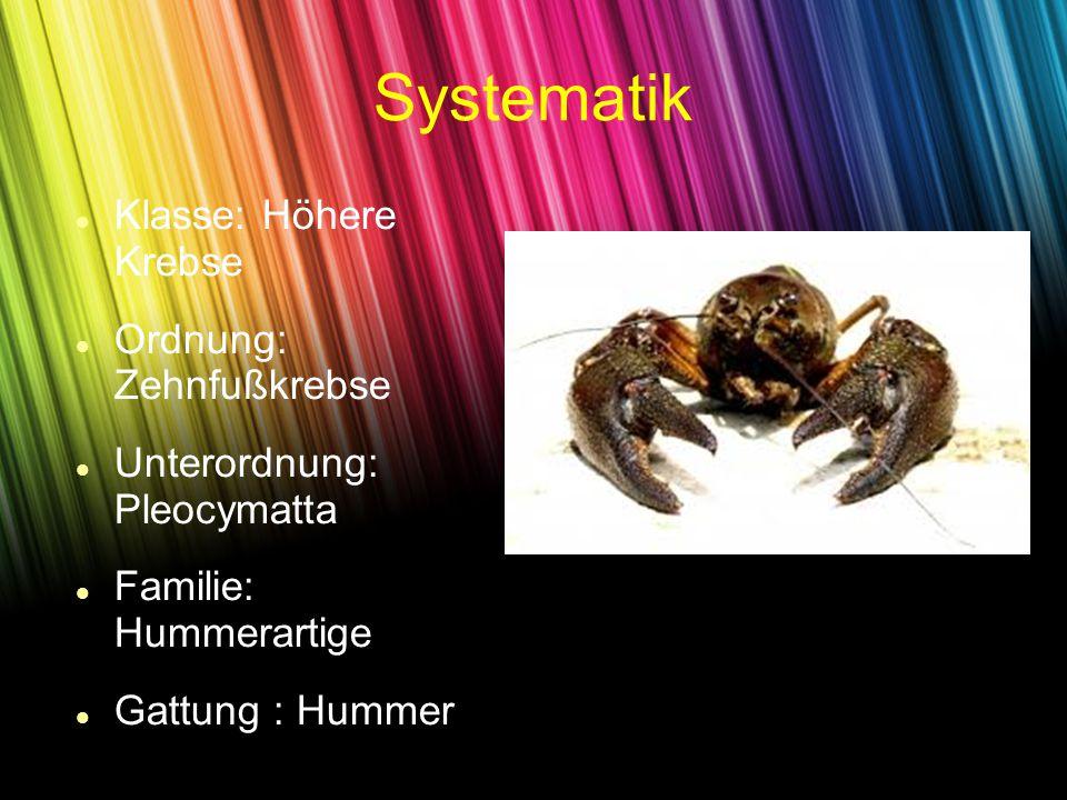Systematik Klasse: Höhere Krebse Ordnung: Zehnfußkrebse Unterordnung: Pleocymatta Familie: Hummerartige Gattung : Hummer